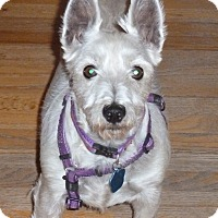 Adopt A Pet :: Adele-pending adoption - Omaha, NE