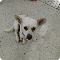 Adopt A Pet :: Albert - Simi Valley, CA