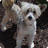 Adopt A Pet :: Keno-Adoption pending - Bridgeton, MO