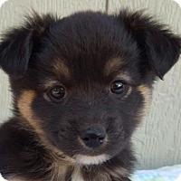 Adopt A Pet :: Escargot - Manhattan, NY
