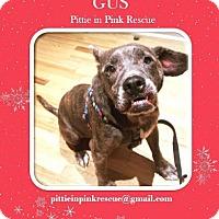 Adopt A Pet :: Gus - nashville, TN