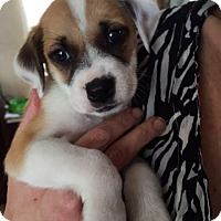 Adopt A Pet :: Peace - Adopted! - San Diego, CA