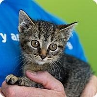 Adopt A Pet :: Catalie Portman - Houston, TX