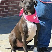 Adopt A Pet :: Sadie - Manassas, VA