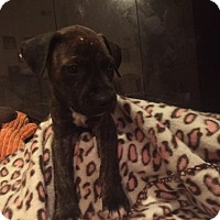 Adopt A Pet :: Oliver - Tampa, FL