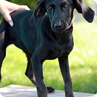 Adopt A Pet :: Nissa - Waldorf, MD