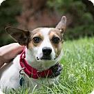 Adopt A Pet :: Daisy (Has application)