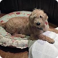 Adopt A Pet :: Jett - Christiana, TN