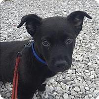 Adopt A Pet :: Meeko - Neosho, MO