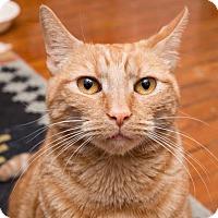 Adopt A Pet :: Catman - Philadelphia, PA