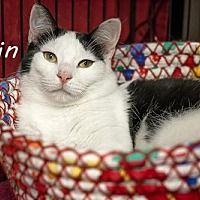 Adopt A Pet :: Odin - Albuquerque, NM