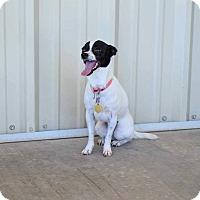 Adopt A Pet :: Lana - Sierra Vista, AZ