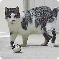 Adopt A Pet :: Mae $75 - Seneca, SC