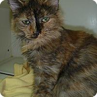 Adopt A Pet :: Ellie - Hamburg, NY