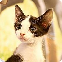 Adopt A Pet :: Tom Riddle - Baytown, TX