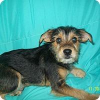 Adopt A Pet :: FRANKIE - EASTPOINTE, MI