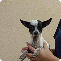 Adopt A Pet :: Marty - Oviedo, FL