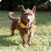 Adopt A Pet :: Rusty Red - Mocksville, NC