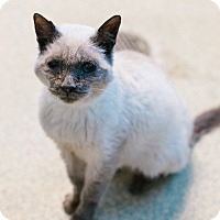 Adopt A Pet :: Wheezy - Indianapolis, IN
