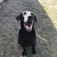 Adopt A Pet :: Samson - Jackson, MS