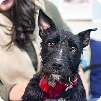Adopt A Pet :: Dane DeHaan - Jersey City, NJ