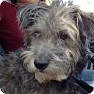 Adopt A Pet :: Winkler