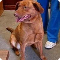 Adopt A Pet :: Kia - Henderson, KY
