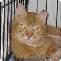 Adopt A Pet :: ADAM - Jenkintown, PA