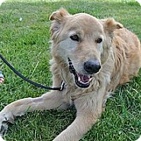 Adopt A Pet :: Rusti - Gentle & Calm - Concord, CA