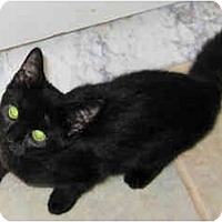 Adopt A Pet :: Tasha - Catasauqua, PA