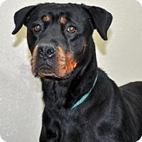 Adopt A Pet :: Athena - Port Washington, NY
