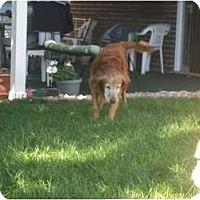 Adopt A Pet :: Breeze - Denver, CO
