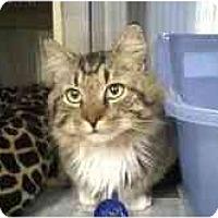 Adopt A Pet :: Manny - Greenville, SC