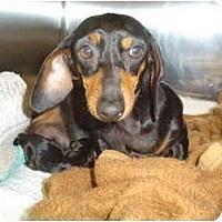 Adopt A Pet :: BETSIE & ANGEL - Portland, OR