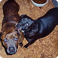 Adopt A Pet :: Tri-Pod - Longview, TX