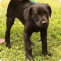 Adopt A Pet :: Feebee - Staunton, VA