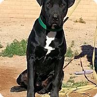 Adopt A Pet :: Lukas - Alamogordo, NM