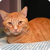 Adopt A Pet :: Rob Roy - Milford, MA