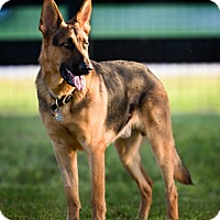 Adopt A Pet :: Trooper - Inverness, FL