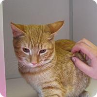 Adopt A Pet :: Colette - Manning, SC