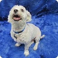 Adopt A Pet :: Tobie - Portland, OR