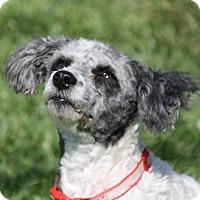 Adopt A Pet :: Claire - Edmonton, AB