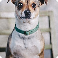 Adopt A Pet :: Poppy - Portland, OR