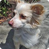 Adopt A Pet :: Nova - San Jose, CA