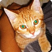 Adopt A Pet :: Artro - Ravenna, TX