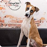 Adopt A Pet :: Rocky - Apache Junction, AZ