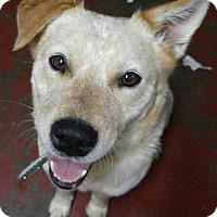 Adopt A Pet :: Jessie - Jarrell, TX