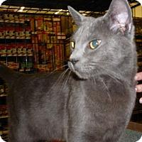 Adopt A Pet :: Blue Fox - Dallas, TX