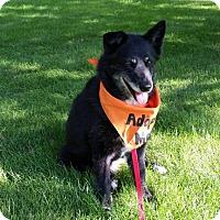 Adopt A Pet :: Precious - Saskatoon, SK
