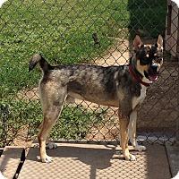 Adopt A Pet :: Sir Charles - Larned, KS